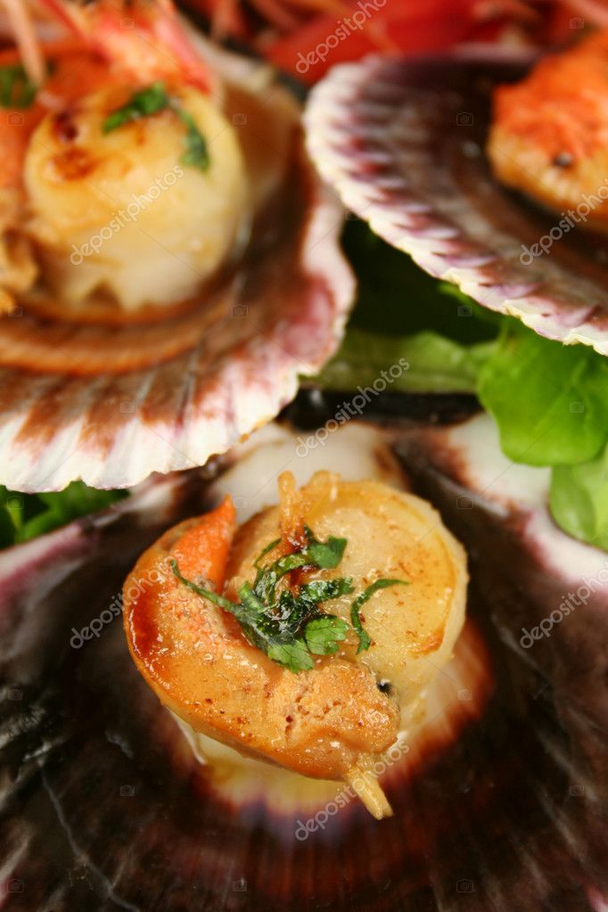 Delicious pan fried sea scallops in their shells ready to serve. — Stock Photo #11778683