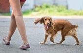 Komik köpek — Stok fotoğraf