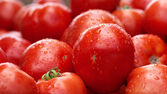 There are many tomatoes — Stock Photo