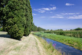 Row of Cypresses Along a Brook — Stock Photo