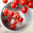 Постер, плакат: Cherry Tomatoes Tumbling From Metal Colander Into Metal Pan