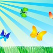 Butterflies — Stock Photo #11553621