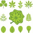 Different  types of leaves, vector illustration — Stock Vector