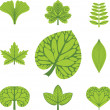 Different  types of leaves, vector illustration, leaves icon — Stock Vector