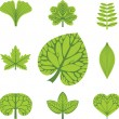 Stock Vector: Different types of leaves, vector illustration, leaves icon