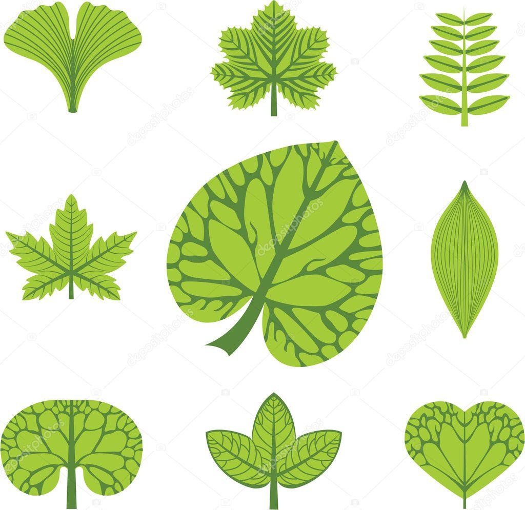 不同类型的叶子,矢量图