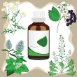 Medicinal herbs with bottle, vector illustration — Stock Vector #11438117