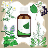 Medicinal herbs with bottle, vector illustration — Stock Vector