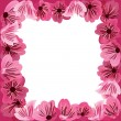 Flowers frame,  floral vector background - Stock Vector