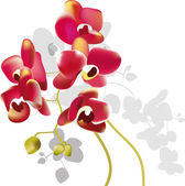 Red orchid flowers — Stock Vector