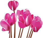цикламен, цветущий розовый цветок векторная иллюстрация — Cтоковый вектор