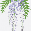 Blooming wisteria branch with leaves, vector illustration - Stock Vector