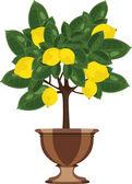 Lemon tree in a flowerpot vector illustration — Stock Vector