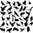 Royalty-Free Stock Vector Image: Bird silhouette
