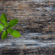 Plant on Wood Background — Stock Photo