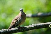 Pigeon 2 — Photo