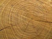 The cut tree closeup — Stock Photo