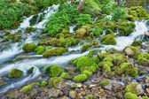 Beautiful creek — Stock Photo