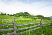 Green landscape — Stock Photo