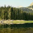 Mountain, forest and lake - Stock Photo
