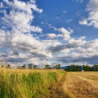 Stock Photo: Summertime landscape