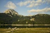 Mountain, forest and lake — Stock Photo