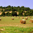 Stock Photo: Forage in rolling countryside of Murgia