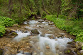 Brook in Tatra Mountains. — Stock Photo