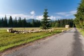 Beginning of Chocholowska Valley in Tatra Mountains. Poland — Stock Photo
