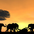 Elephants Mourning a Death - Stock Photo