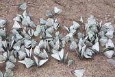 Motýlů — Stock fotografie
