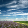 Wind mills - Stock Photo