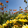 Field of flowers — Stock Photo #11389657