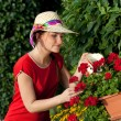 Young gardener woman watering plants — Stock Photo #11389768