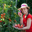 Young gardener woman harvesting tomatoes — Stock Photo #11389788