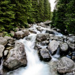 Forest stream — Stock Photo #11394290