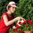 Young gardener woman watering plants — Stock Photo