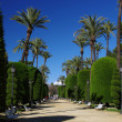 The Park Genoves. Cadiz - Stock Photo