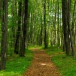 Leafy path among Forest Polish Jura — Stock Photo #11365454