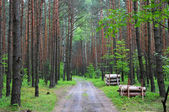 The path among Forest Polish Jura — Stock Photo