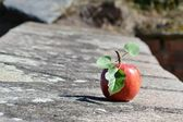 Apple on the wall — Stock Photo