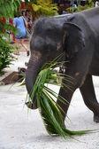 Elephant walk on the street — Stock Photo