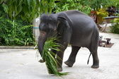 Elephant on the street — Stock Photo