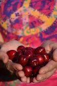 Cherries in hand of the women — Stock Photo