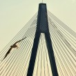 Anzac Bridge — Stock Photo