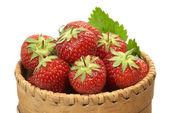 草莓在树皮篮子-2 — 图库照片