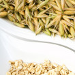 Seeds of oats — Stock Photo #11518615