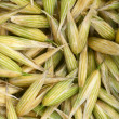 Seeds of oats — Stock Photo #11518648
