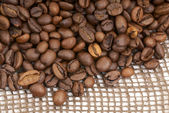 Coffee beans-2 — Stock Photo