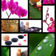 Stock Photo: Collage of spa